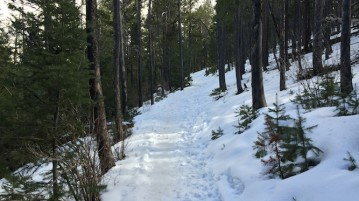 A romantic hike through Elk Meadow Park. Photo by Connor W. Davis | Clarion