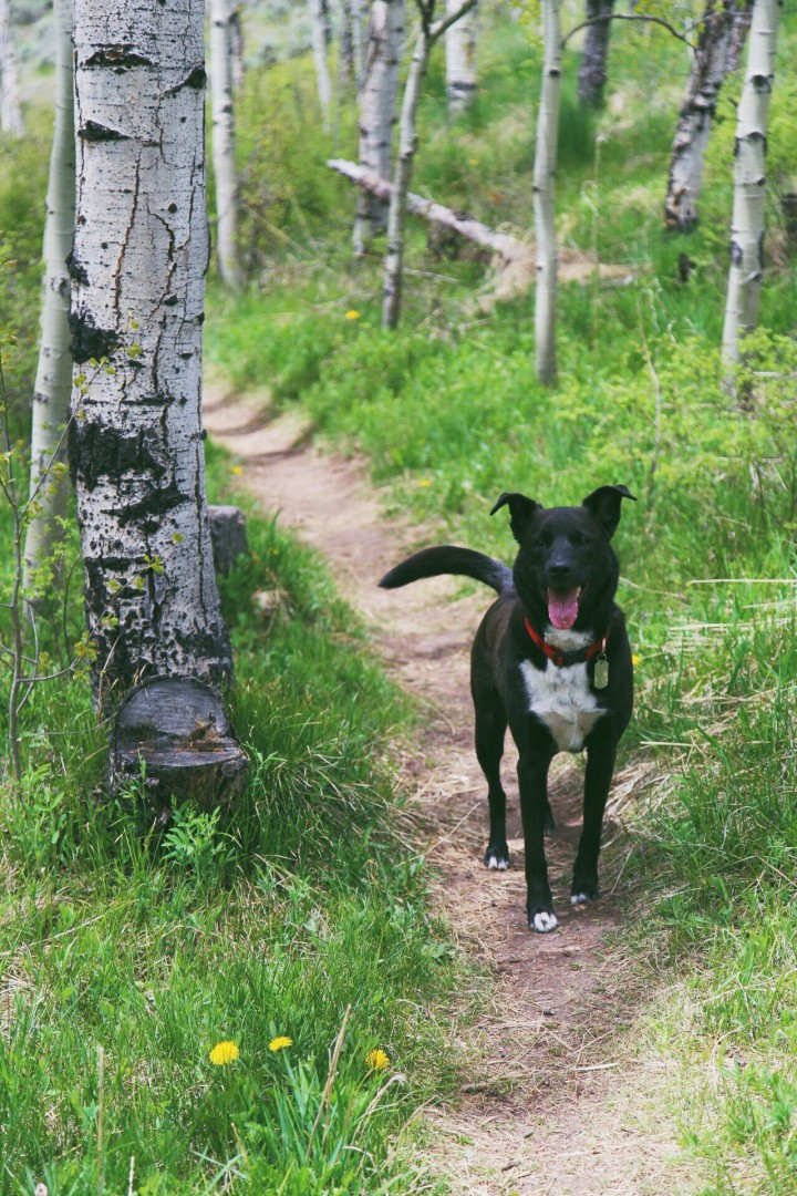Your dog will thank you for letting it explore the mountains of Crested Butte. Andrea Watson | Clarion