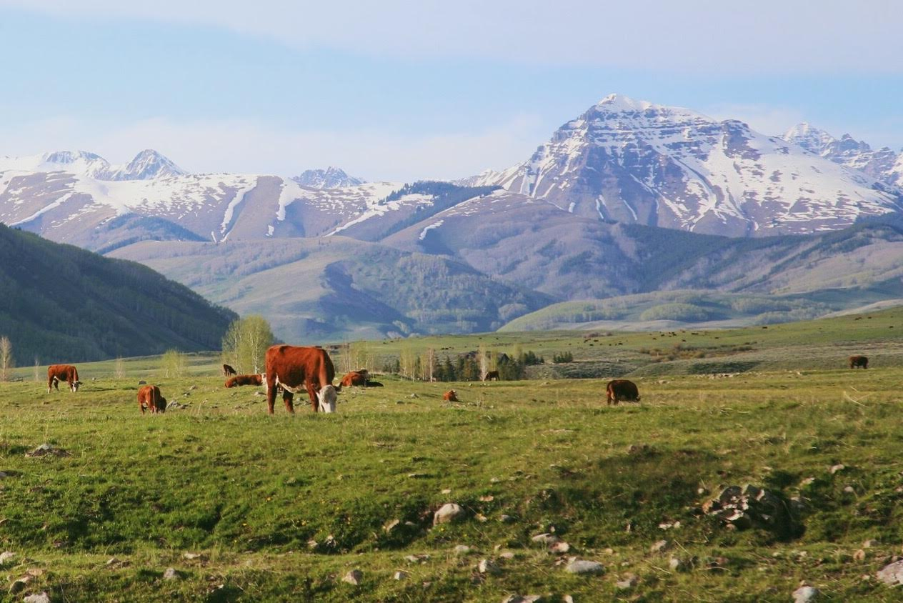 Crested Butte is reminiscent of a postcard. Andrea Watson | Clarion