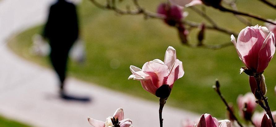 personwalking_pinkflower
